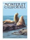 Monterey  California - Sea Lions