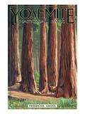 Mariposa Grove - Yosemite National Park  California