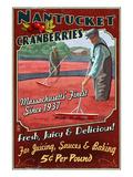 Nantucket  Massachusetts - Cranberry Farm
