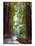 Muir Woods National Monument  California - Pathway