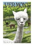 Vermont - Alpaca Scene
