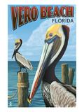 Brown Pelicans - Vero Beach  Florida