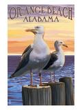 Orange Beach  Alabama - Seagulls