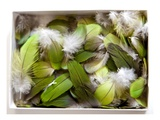 Parrot Feathers  no 3
