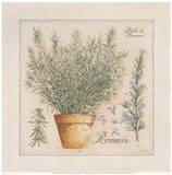 Herbes de Provence III