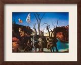 Swans Reflecting Elephants  c1937