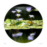 Serenity Reflection 2