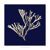 Seaweed on Navy II Reproduction d'art par Vision Studio