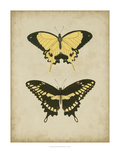 Antique Butterfly Pair I