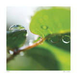 Dew Drops 1