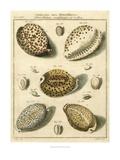 Porcellaine Shells I