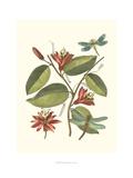 Midsummer Floral IV