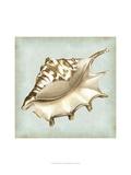 Sea Dream Shells IV