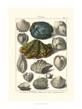 Seaside Treasures IV