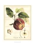 Tuscan Fruits I