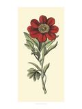 Embellished Blooming Peonies II