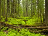 Forest Floor, Humboldt Redwood National Park, California, USA Papier Photo par Cathy & Gordon Illg