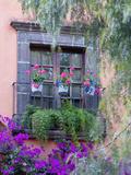 Window with Geraniums  San Miguel De Allende  Mexico