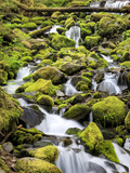 Lush Area with Small Creek, Olympic National Park, Washington, USA Papier Photo par Tom Norring