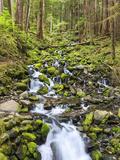 Small Creek with Waterfall  Olympic National Park  Washington  USA