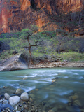 Zion Canyon  Zion National Park  Utah  USA