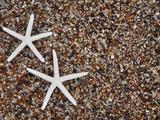 Starfish Skeletons  Kauai  Hawaii  USA
