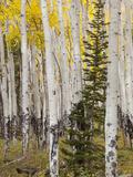 Moraine Park  Rocky Mountain National Park  Colorado  USA