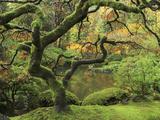Portland Japanese Garden in Early Autumn: Portland Japanese Garden, Portland, Oregon, USA Papier Photo par Michel Hersen
