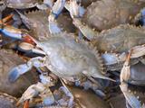 Blue Crabs  Maine Avenue Fish Market  Washington DC  USA  District of Columbia