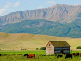 Wallowa Mountains and Barn in Field Near Joseph  Wallowa County  Oregon  USA