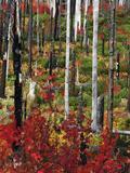 Autumn at the Santiam Pass  Oregon  USA