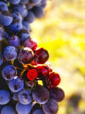 Arbor Crest Wine Cellars in Spokane  Washington  USA