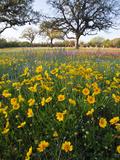 Roadside Wildflowers  Texas  USA