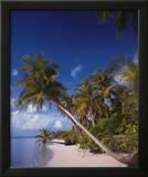 Serenity: Palm Trees