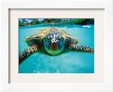 Honu  Hawaiian Sea Turtle