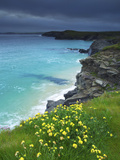 Mother Ivey's Bay  Padstow  Cornwall  England  United Kingdom  Europe