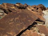 Rock Engravings  Huab River Valley  Torra Conservancy  Damaraland  Namibia  Africa