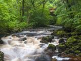 Ingleton Waterfalls  River Twiss  Ingleton  Yorkshire Dales  Yorkshire  England  UK  Europe
