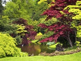 Acer Trees and Pond in Sunshine  Gardens of Villa Melzi  Bellagio  Lake Como  Lombardy  Italy