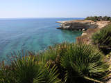 Coast Near Cassibile  Siracusa Province  Sicily  Italy  Mediterranean  Europe