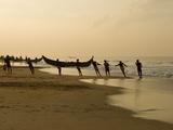 Fishermen Hauling in Nets at Sunrise  Chowara Beach  Near Kovalam  Kerala  India  Asia