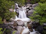Waterfall in Woods  Yosemite National Park  UNESCO World Heritage Site  Yosemite  California  USA