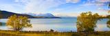 Panorama of Autumn Trees at Lake Tekapo  Canterbury  Southern Lakes  South Island  New Zealand