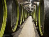 Wooden Wine Barrels  Rosa Coeli Wine Cellar  Dolni Kounice  Brnensko  Czech Republic  Europe