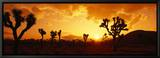 Sunset, Joshua Tree Park, California, USA Tableau sur toile encadré