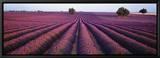 Champ de lavande, Valensole, Provence, France Tableau sur toile encadré par Panoramic Images