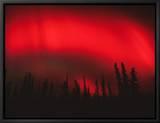 Red Aurora Borealis, Alaska Tableau sur toile encadré par Michael S. Quinton