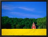 Rape Field  Red House and Forest  Kullaberg Skane  Kullaberg  Skane  Sweden