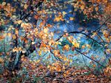 Cœur jaune Papier Photo par Ursula Abresch