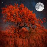 Couleur d'halloween Papier Photo par Philippe Sainte-Laudy